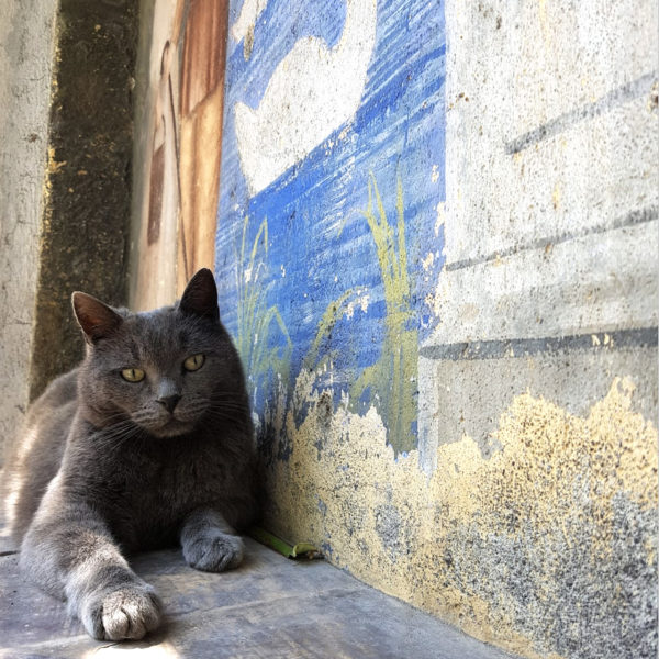la-baronessa-gatto